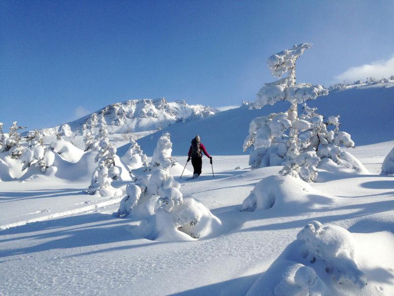 Backcountry Furano Hokkaido